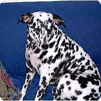 Adopt A Pet :: Roxie - Scottsdale, AZ