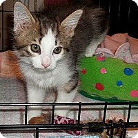 Adopt A Pet :: Tails - Acme, PA