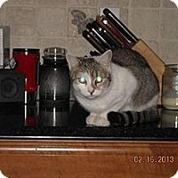 Adopt A Pet :: Winnie - Riverside, RI