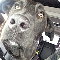 Adopt A Pet :: *Ace - PENDING - Westport, CT