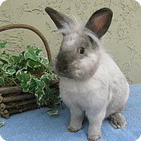 Adopt A Pet :: Sammy - Bonita, CA