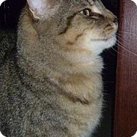 Adopt A Pet :: Alfonzo - Hamburg, NY