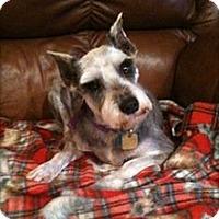 Adopt A Pet :: Precious - Sharonville, OH