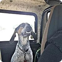 Adopt A Pet :: Annie-URGENT - Providence, RI