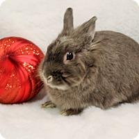Adopt A Pet :: Jingles - Hillside, NJ