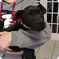 Adopt A Pet :: Rocky - Tampa, FL