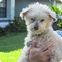 Adopt A Pet :: Mr Ollie - Melbourne, FL