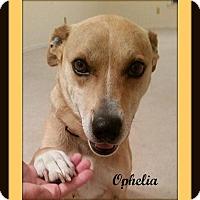 Adopt A Pet :: Ophelia - Memphis, TN