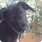 Adopt A Pet :: Pixie's Pup - Peanut