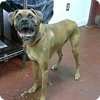 Adopt A Pet :: PITTSBURGH - Atlanta, GA