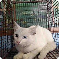 Domestic Shorthair Kitten for adoption in San Bernardino, California - URGENT on 9/21 San Bernardino