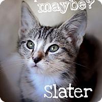 Adopt A Pet :: Slater - Jacksonville, FL