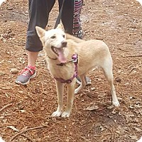 Golden Retriever Mix Dog for adoption in Savannah, Georgia - Honey 2
