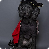Adopt A Pet :: Emery - Baton Rouge, LA