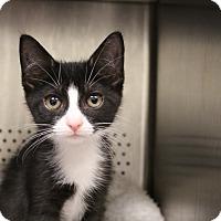 Adopt A Pet :: Valerie - Sarasota, FL
