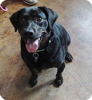 Terrier (Unknown Type, Medium) Mix Dog for adoption in House Springs, Missouri - Van