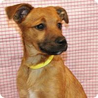 Adopt A Pet :: Lela - Hillsdale, IN