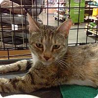 Adopt A Pet :: Hera - Lancaster, CA