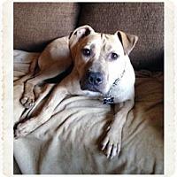 Adopt A Pet :: Kai - Tucson, AZ