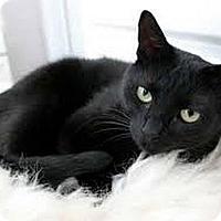 Adopt A Pet :: Pagan - Hudson, NY