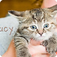 Adopt A Pet :: Lucy - Somerset, PA