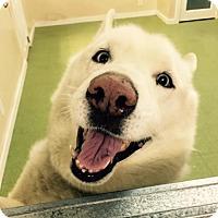 Adopt A Pet :: Jay Jay Sinatra - Norwalk, CT