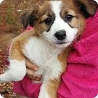 Adopt A Pet :: Boone - Seabrook, NH