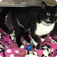 Adopt A Pet :: Pepper - Hibbing, MN