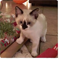 Adopt A Pet :: Mystique - Spring, TX