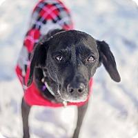 Adopt A Pet :: Georgia - Atlanta, GA