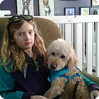 Adopt A Pet :: Brando - Thousand Oaks, CA