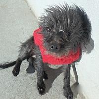 Adopt A Pet :: Frazzle - Seguin, TX