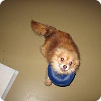 Adopt A Pet :: DELORES - Port Clinton, OH
