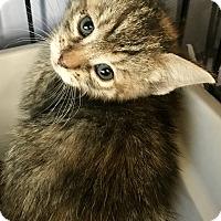 Adopt A Pet :: Clover - Island Park, NY