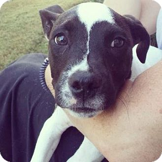 Joey Jeffrey | Adopted Puppy | Atlanta, GA | American ... Selkirk Rex Atlanta