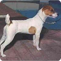 Adopt A Pet :: PHOENIX - Scottsdale, AZ