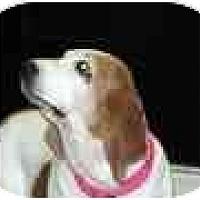 Adopt A Pet :: Blanche - Phoenix, AZ