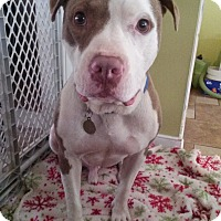 Adopt A Pet :: Brady - Richmond, VA