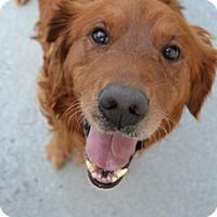 Adopt A Pet :: Fletcher - Portland, ME