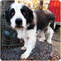 Adopt A Pet :: Prissy - Kyle, TX