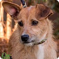 Adopt A Pet :: Miracle - Savannah, GA