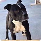 Adopt A Pet :: GALLOWAY