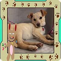 Adopt A Pet :: Boo - Genoa City, WI