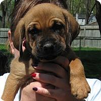 Adopt A Pet :: Marcie - Aurora, IL