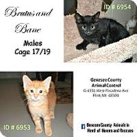 Adopt A Pet :: Bane - Flint, MI