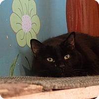 Adopt A Pet :: Bitty Boo - Elyria, OH