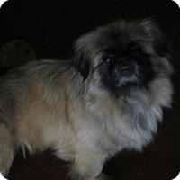 Adopt A Pet :: Macy - Oakdale, TN