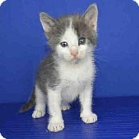 Adopt A Pet :: A025482 - Norman, OK