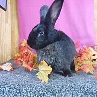 Adopt A Pet :: Ruby - Williston, FL