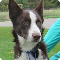 Adopt A Pet :: Chloe - Northfield, MN